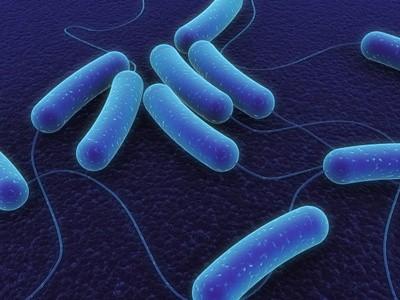 Coli Bakterien